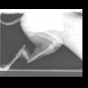 Perro Grande-Extremidad-6_19_2014-11_23_06 AM-765