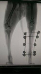 radiografia pata
